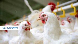 «مرغ» قصد کوتاه آمدن ندارد؛ نرخ هر کیلو همچنان ۳۵ هزار تومان