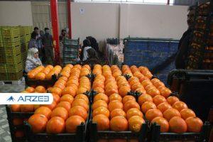 آغاز عرضه میوههای تنظیم بازار