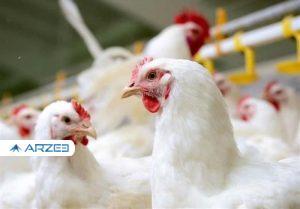 اتحادیه مرغداران: حداکثر قیمت هر کیلو مرغ ۲۹ هزار تومان است
