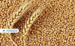 افزایش قیمت گندم و خوراک دام در بازارهای جهانی