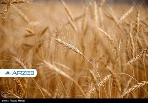 افزایش ۱۰ برابری قیمت گندم در ۱۰ سال گذشته
