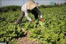 افزایش ۴۰۰ تا ۷۰۰ درصدی قیمت کود کشاورزی