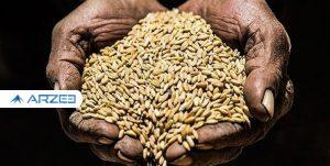 افزایش 9 دلاری قیمت گندم در بازارهای جهانی