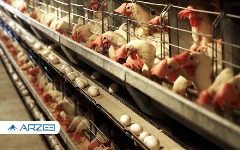 الزامی شدن درج قیمت مصرفکننده برروی مرغ و تخم مرغ