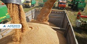 تداوم افزایش قیمتهای جهانی گندم و خوراک دام