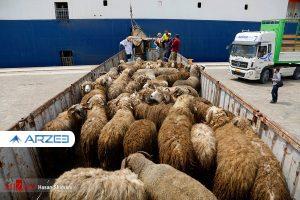 خروج دام زنده از استانها بدون مجوز قاچاق محسوب میشود