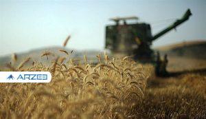 خودکفایی یا واردات گندم در سال آینده؛ نرخ خرید تضمینی تعیین کننده است