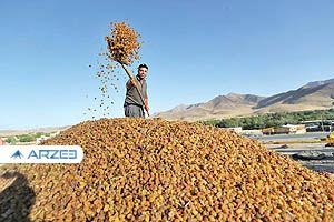 صادرات کشمش ایرانی از افغانستان
