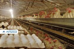 قیمت جدید تخم مرغ فردا اعلام میشود