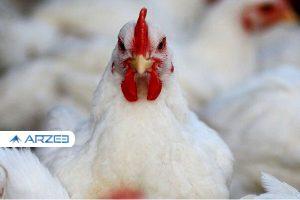 نرخ هر کیلو مرغ ۲۶ هزار تومان شد