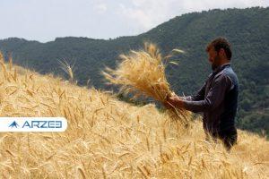قیمت خرید تضمینی گندم از کشاورزان افزایش یافت