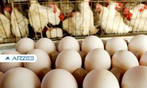 رئیس کمیسیون کشاورزی: در حوزه بازار مرغ و تخم مرغ وزارت جهاد باید پاسخ بدهد